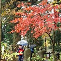 第1回「コールバスツアー 雲辺寺紅葉撮影会」行ってきた。