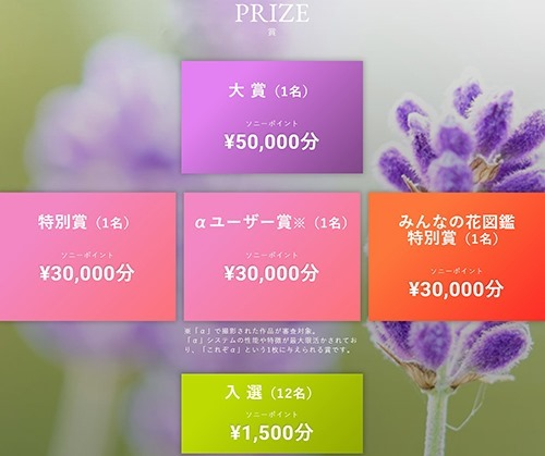 SnapCrab_NoName_2020-4-3_17-14-11_No-00
